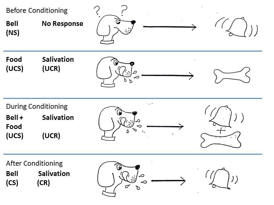 Objective 14 - Introduction to Psychology - examples of classical conditioning