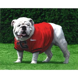 Small Crop Of Uga Dawg House