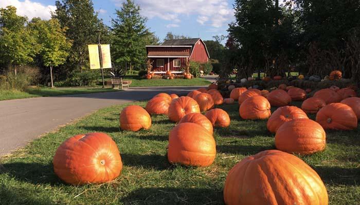 The GIGANTIC Grand Rapids Fall Fun Guide - grkids