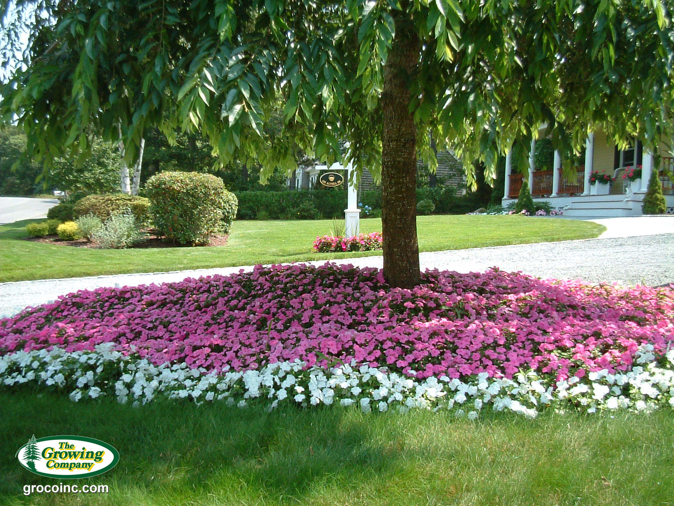 Fall Cape Cod Wallpaper Annual Flower Amp Bed Preparation For Cotuit Osterville