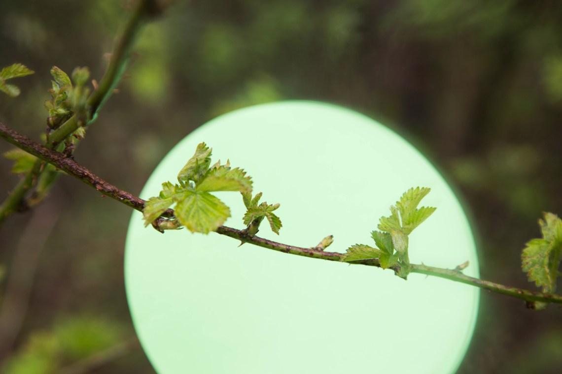 bramenblad