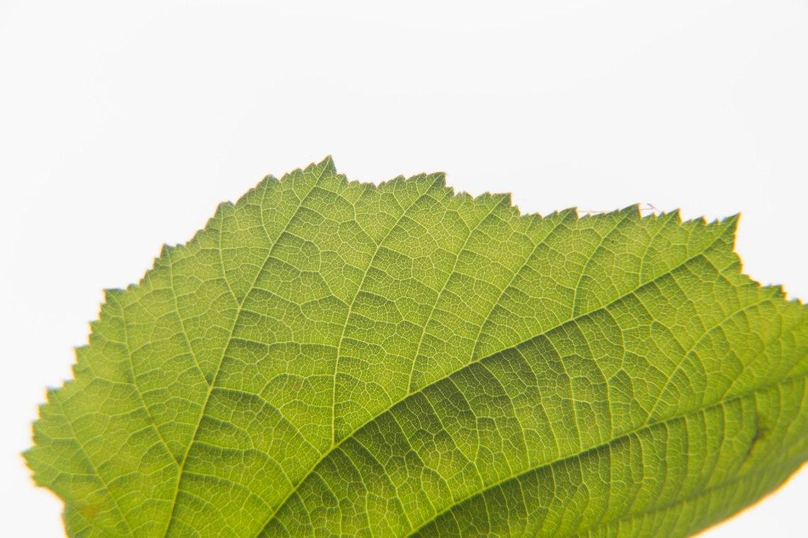 wildplukken-hazelnoten-groene-avonturen