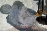 Acropolis Shadow