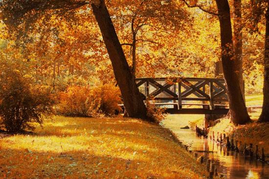 Majestic Fall Wallpaper 20 Quot X30 Quot Fall Landscape Wood Prints