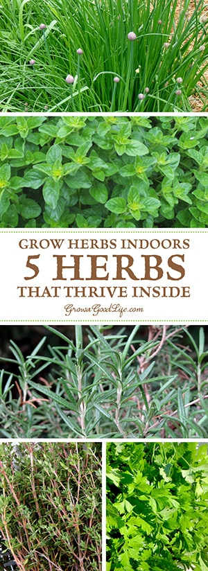 Grow Herbs Indoors: 5 Herbs That Thrive Inside