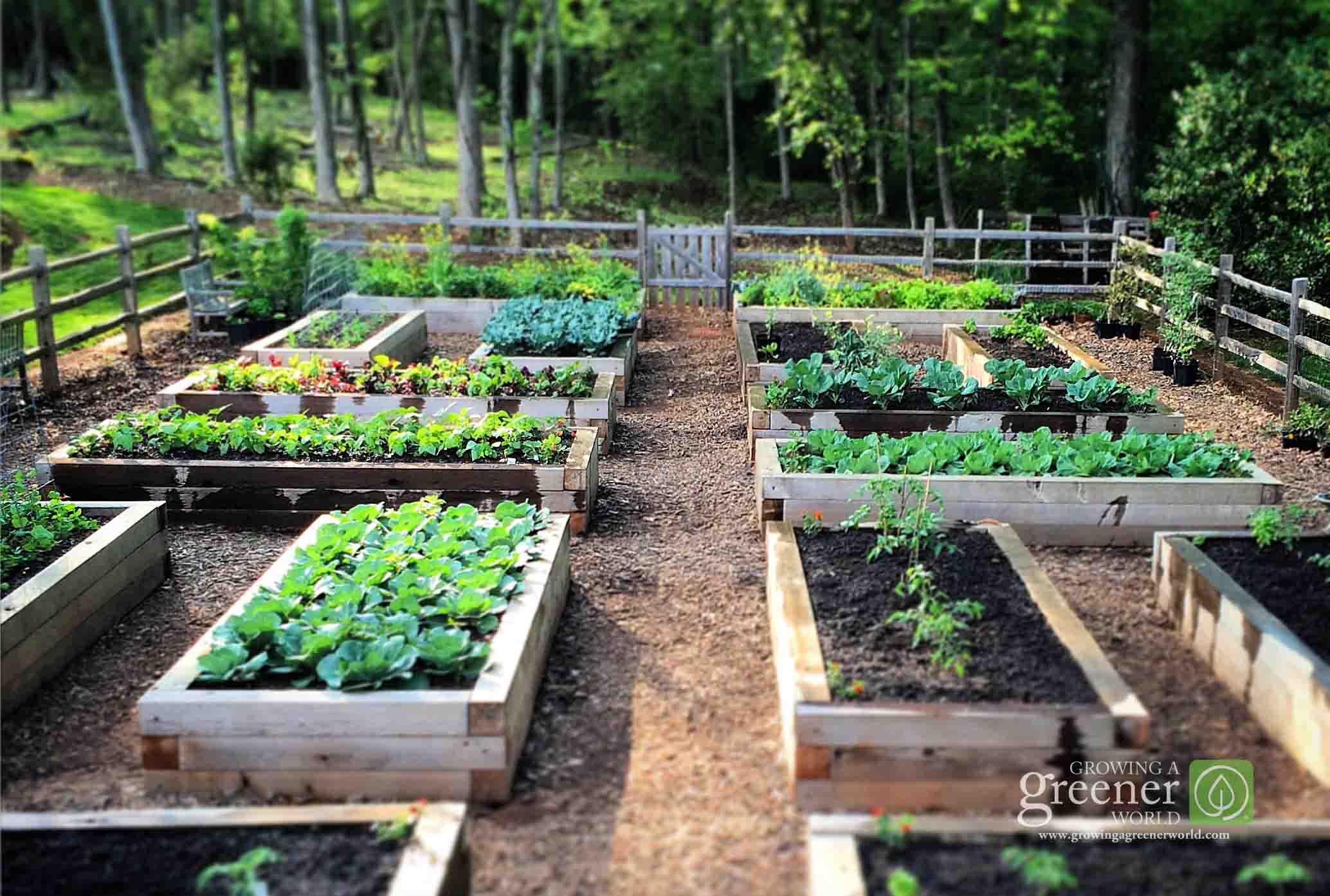 Bunnings Eco Deck Three Key Benefits Of Gardening In Raised Beds Growing A