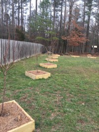 Backyard Fruit Orchard | Outdoor Goods
