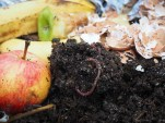 COMPOSTS & WORM FARMS