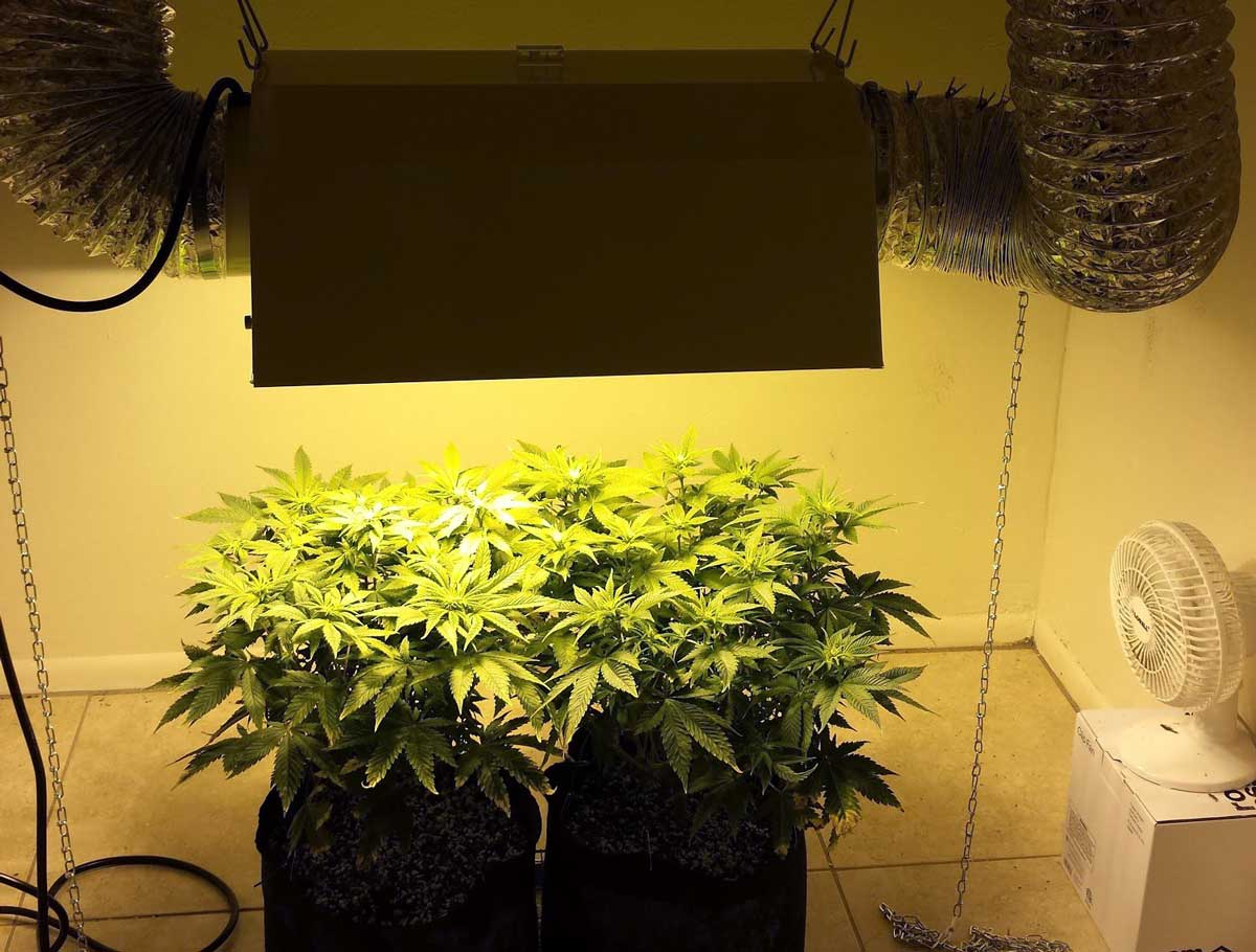 Cool Plants For Your Room Grow Light Breakdown Heat Cost And Yields Grow Weed Easy