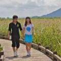 suncheon bay ecological park, suncheon tourism, travel suncheon, travel korea,