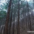 muju, forest meditation, yoga retreat korea