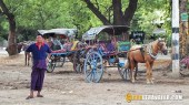 horse carriages bagan