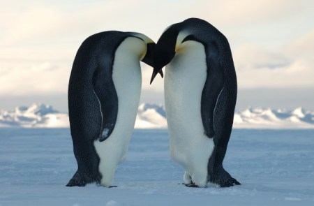 Homosexuality within the Wildlife