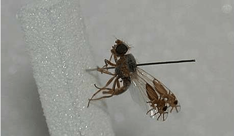 Fruit Fly to Spider Say Hello to My Little Friends