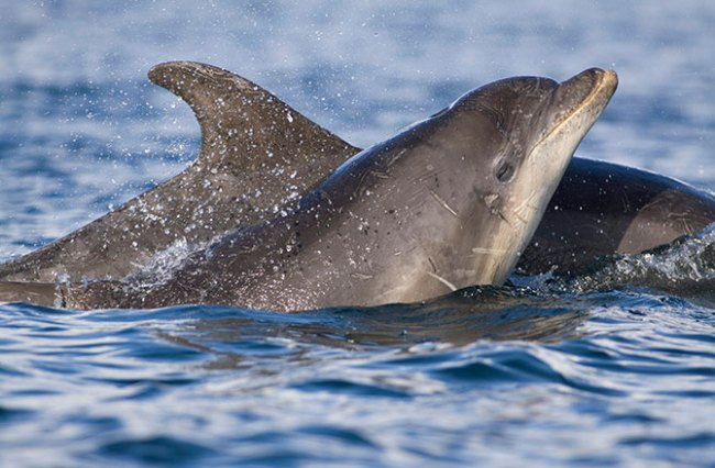 Measles-like Virus Is Killing Dolphins and Whales in Florida
