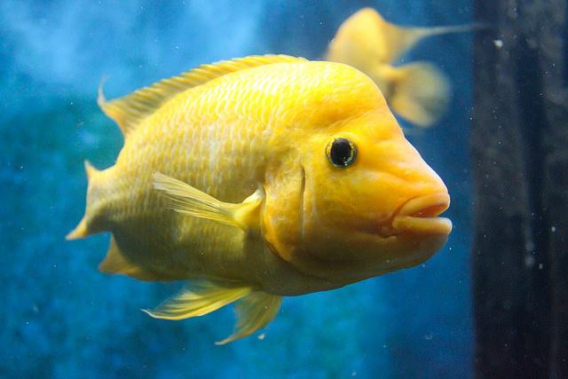 fish langawi malaysia