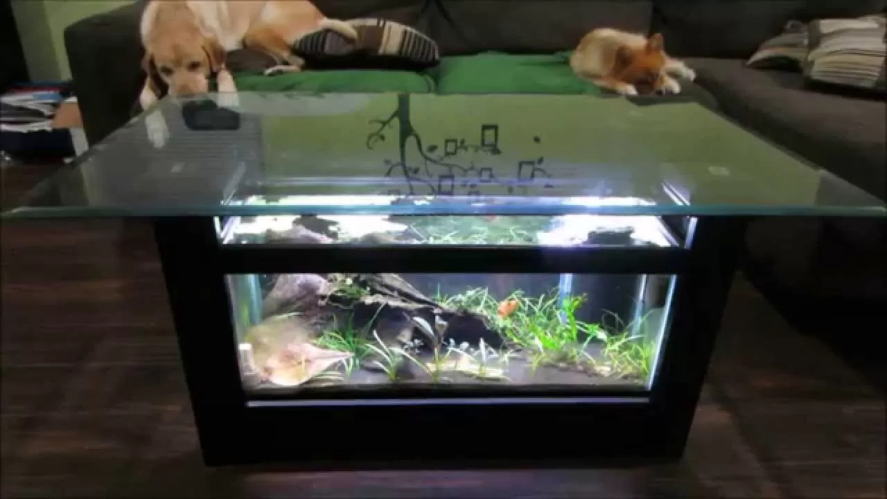 Couchtisch Aquarium Aquarium Fish Tank Coffee Table: 8 Unique Designs | Guide