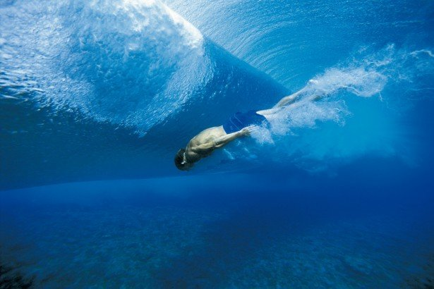 Dolphins have joined surfers in making the most of the only decent - marine biologist job description