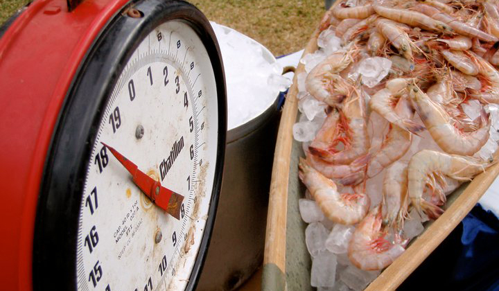 Undercurrent News: Worldwide Shrimp Round-up