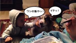 ママという犬