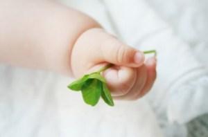赤ちゃん手三つ葉