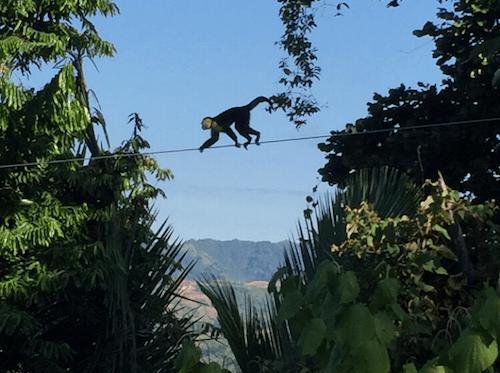 Monkey on a wire
