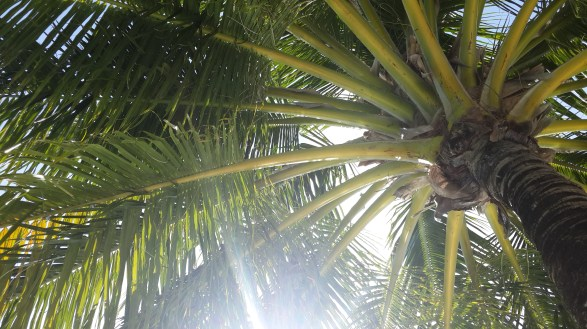 Palms at Kandooma
