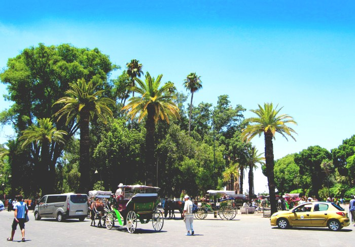Palm trees, Marrakech Medina