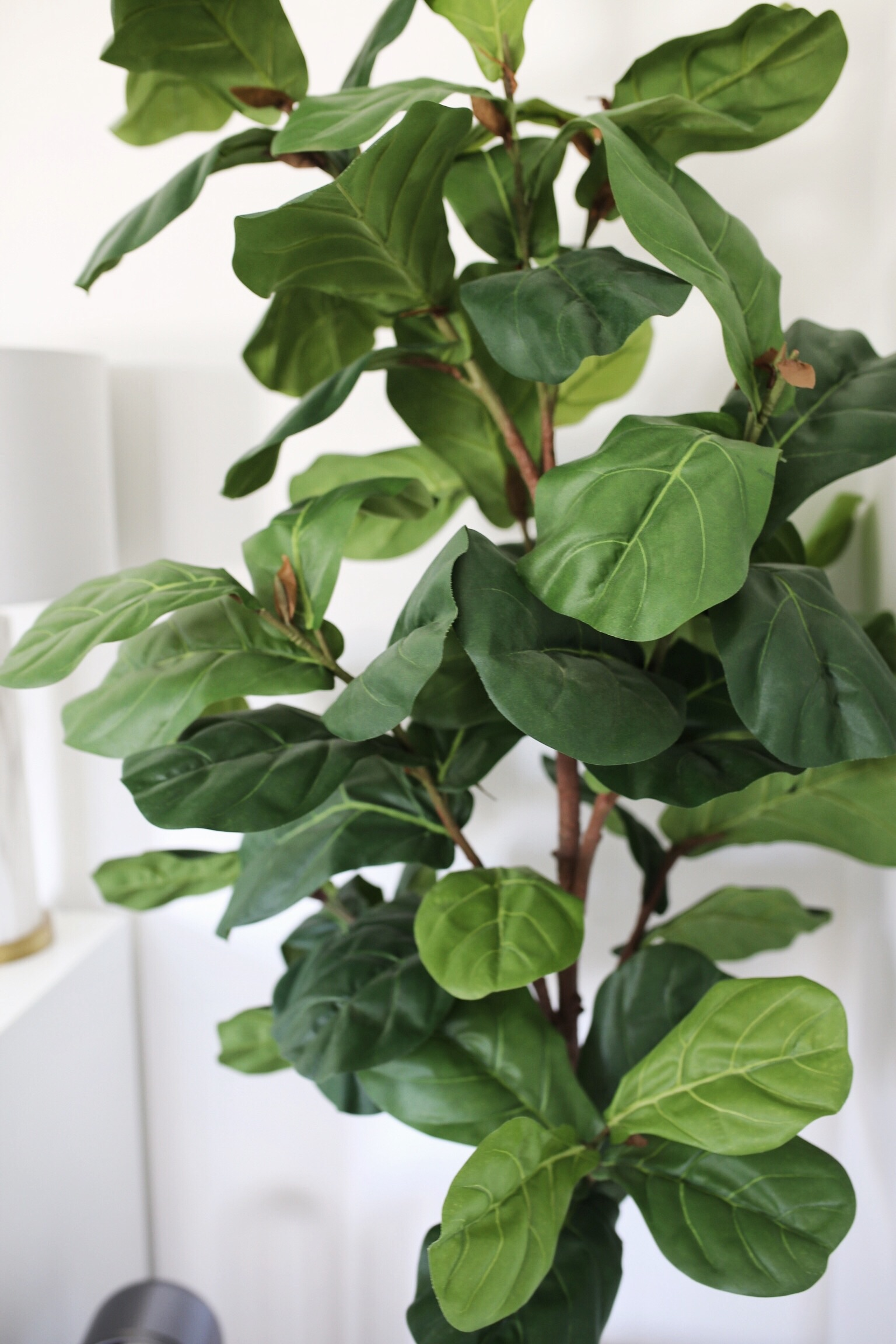Cool Looking Plants The Best Faux Plants For The Home And Where To Buy Them