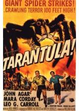 Kaempeedderkoppen-Tarantula
