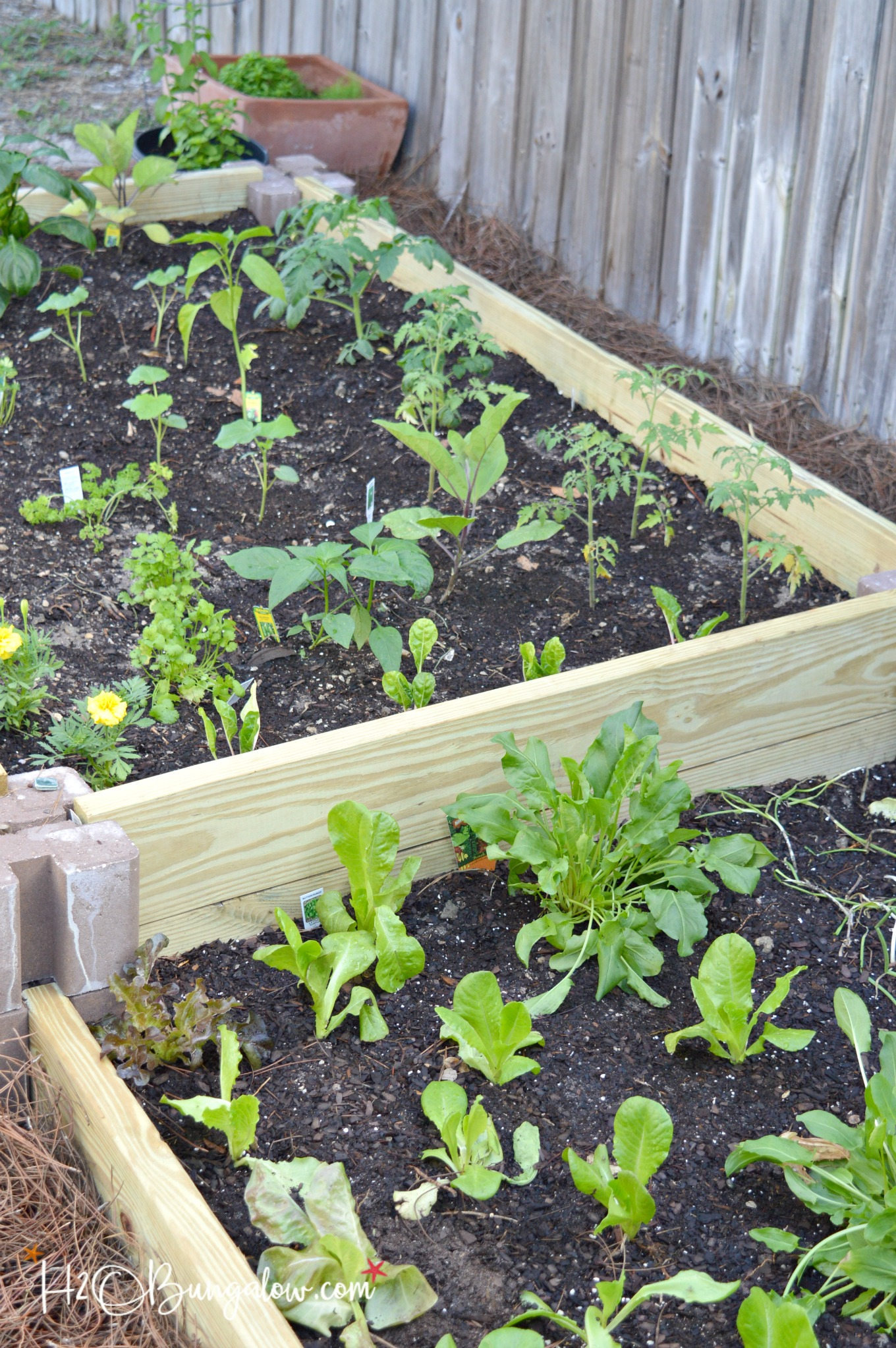 Instructions For Making Raised Garden Beds How To Build A Raised Vegetable Garden Bed H2obungalow