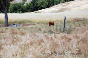 WSI2015-FarmRanch_04