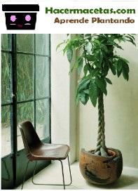 macetas con plantas tejidas