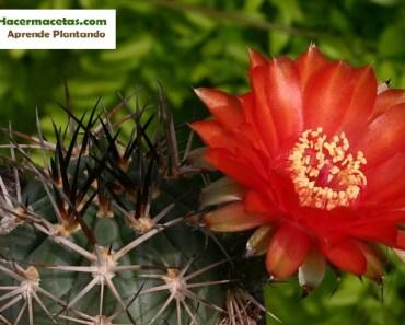 bello cactus argentina