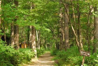 ハイキングに向かう途中の山道