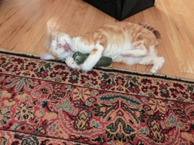 black-friday-someonehashad-a-little-too-much-cat-nip