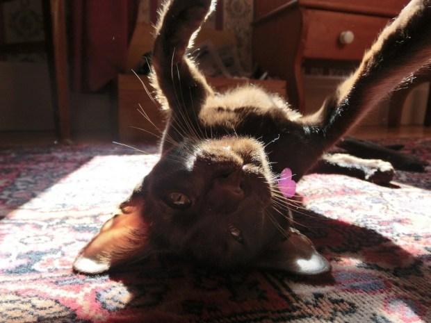 selfie-sunday-zulu