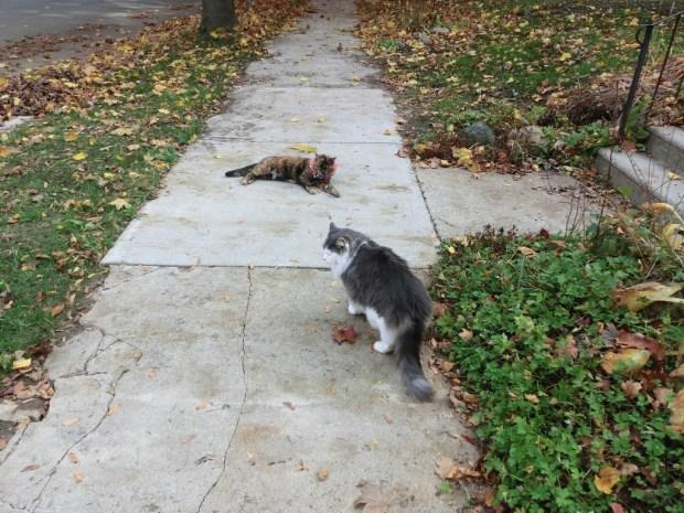 sidewalk-showdow-pet-detective