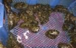 Bào ngư –  Bào ngư biển giá hiện nay bao nhiêu