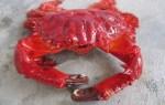 Cua đỏ –  Cua đỏ bao nhiêu tiền 1kg tại TPHCM