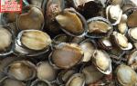 Bào ngư tròn – Bào ngư tròn giá bán bao nhiêu tiền 1kg