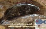 Cá mú đen – Cá mú đen tươi sống giá bao nhiêu tiền
