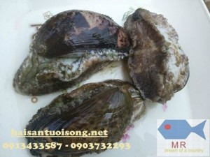 Bào ngư – Bào ngư sống ( Size 10-12 con/kg) giá bao nhiêu tiền
