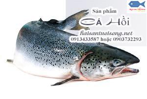 Mua cá hồi tươi ở đâu tại TP.HCM? Giá bán Cá Hồi đỏ bao nhiêu?