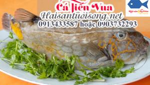 Cá tiến vua - cá Bò Hòm