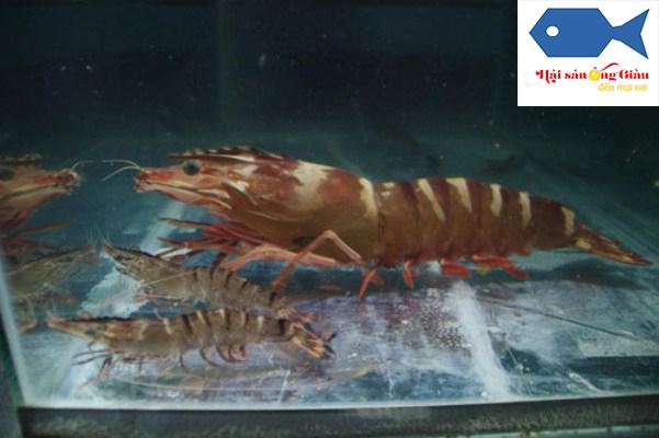 Cung cấp hải sản tươi sống tại Đồng Nai