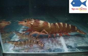 Mua hải sản tươi sống tại Đồng Nai chuyển hàng tận nơi