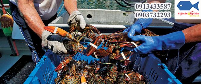 Nơi bán tôm hùm Alaska giá rẻ và chất lượng