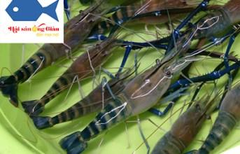 Mua hải sản tươi sống tại Đắk Lắk giá rẻ