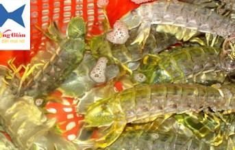 Mua hải sản tươi sống tại Đắk Nông giá rẻ an toàn